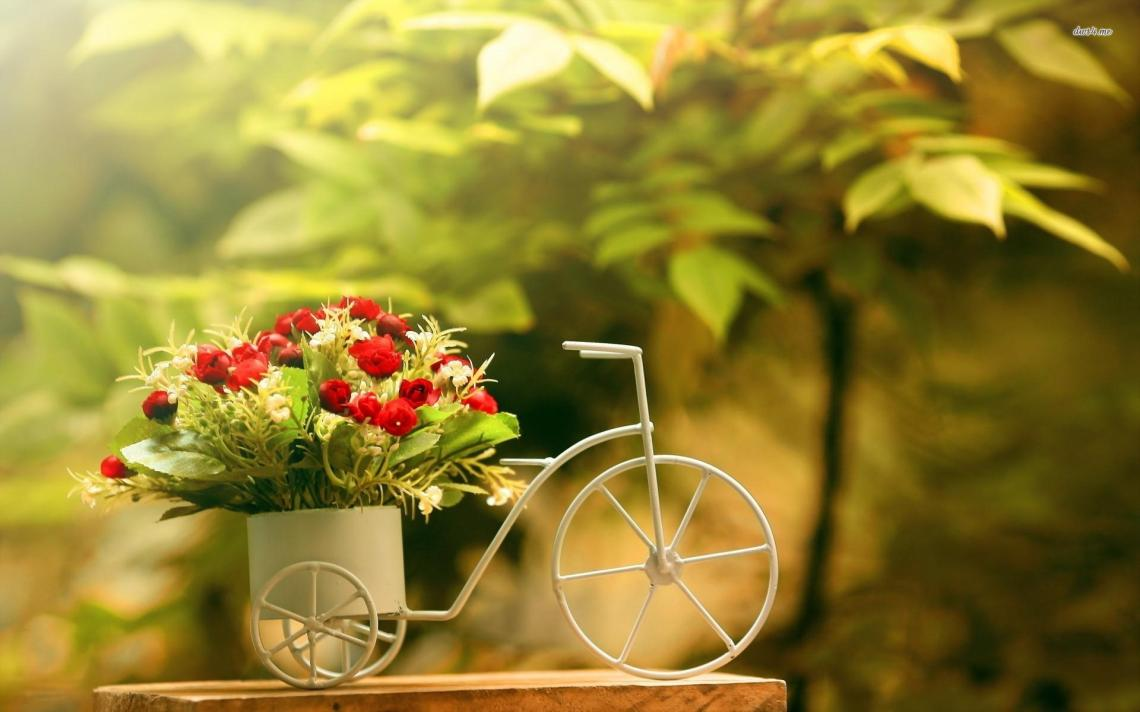 bicycle-bike-flower-bouquet-computer-background-wallpaper-free-stock-photos