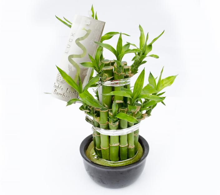 1467892152comanda_bambus_norocos