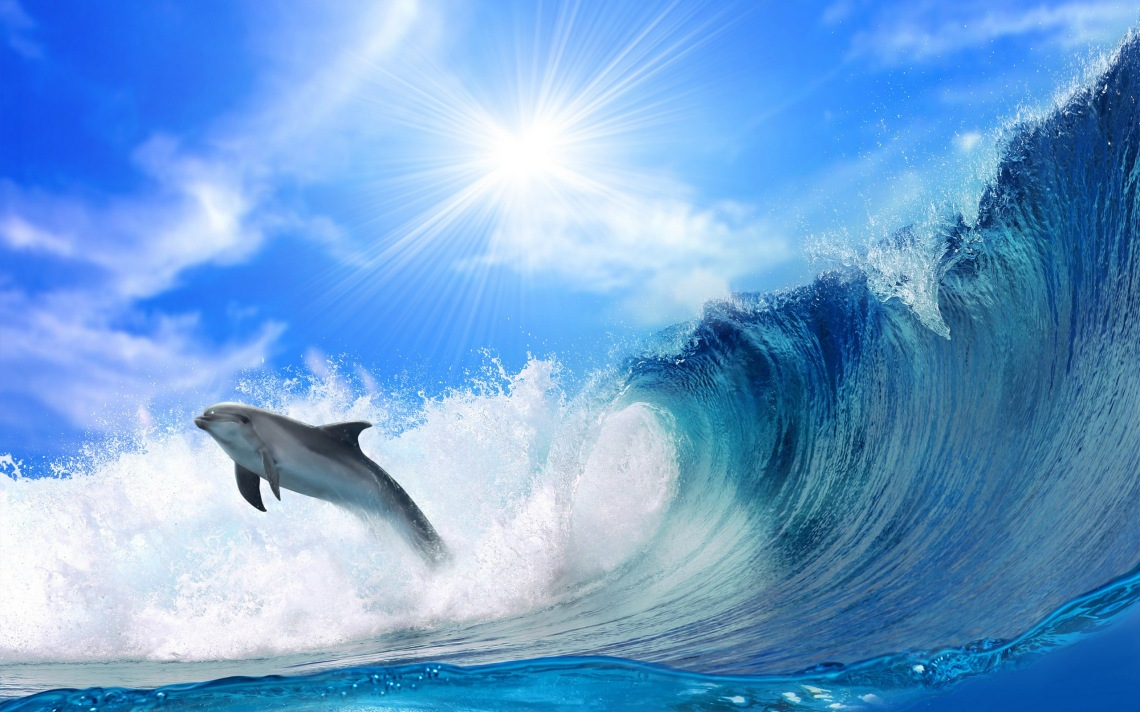 cute-baby-dolphins-swimming-wallpaper-2